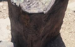 1997-desert-fragments-bronze