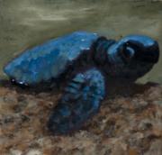 Baby Sea Turtle 1
