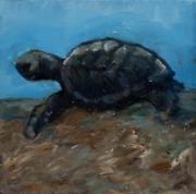 Baby Sea Turtle 2