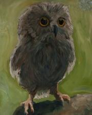 Pubescent Owl