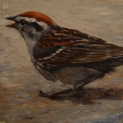 Chipping Sparrow lg
