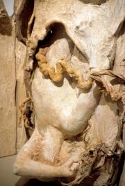 19943-detail-tennant-farm-289