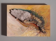 2005-prickly-touch-8x10x6