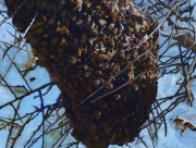 Swarm jpg