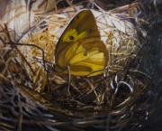 Butterfly's Nest
