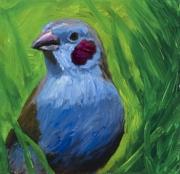 Blue Grossbeak