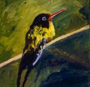 Broad Billed Hummingbird 2