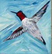 Broad Tailed Hummingbird