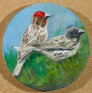 Cassins Finch Pair