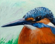 Kingfisher Portrait
