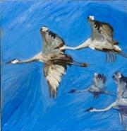 Sandhill Cranes In-flight