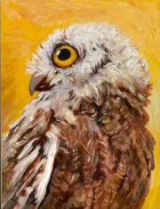 Western Screech Owl Mom 2