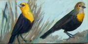 Yellow Headed Black Birds