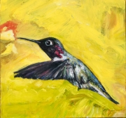 Annas Hummingbird 2