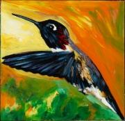 Anna Hummingbird 3