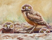 Burrowing Owls 2