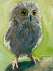 Immature Screech Owl