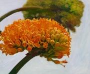 Agave Bloom