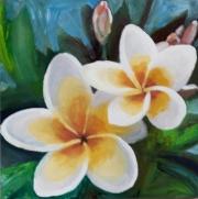 Frangi Pangi Blooms