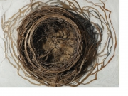 2005-nest-roots-paint-and-board-8x10x6
