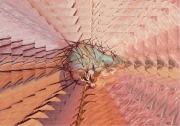 20074-detail_corazon-compressed